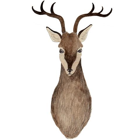 illust: 奈良の鹿